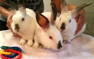 indiana7_03_karley&bunny&lindsay