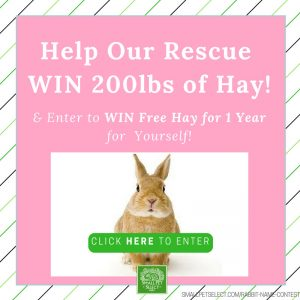 SmallPetSelect Rabbit Rescue Contest