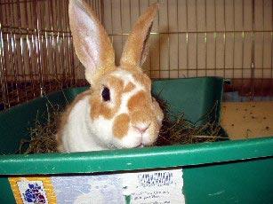 ohiOHrs: sanctuary rabbits