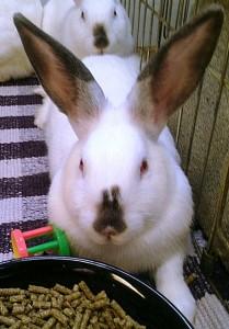 indiana7_01_bunny