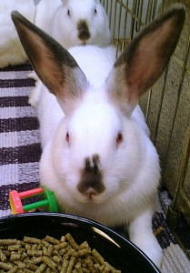 bunny_01