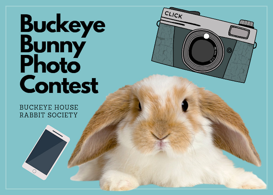 19b738306 For a donation of $5 per photo, you may enter a pic of your bunny for a  chance to win one of three fabulous prizes. Enter as many photos as you  wish.