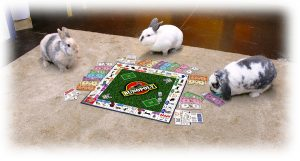 bunnies playing Bunopoly